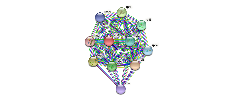 ybiT protein (Pseudomonas aeruginosa) - STRING interaction network