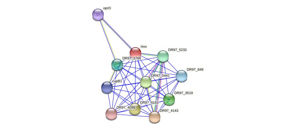 hvn protein (Pseudomonas aeruginosa) - STRING interaction network