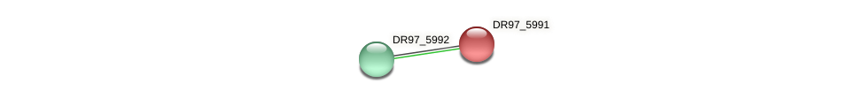 DR97_5991 protein (Pseudomonas aeruginosa) - STRING interaction network