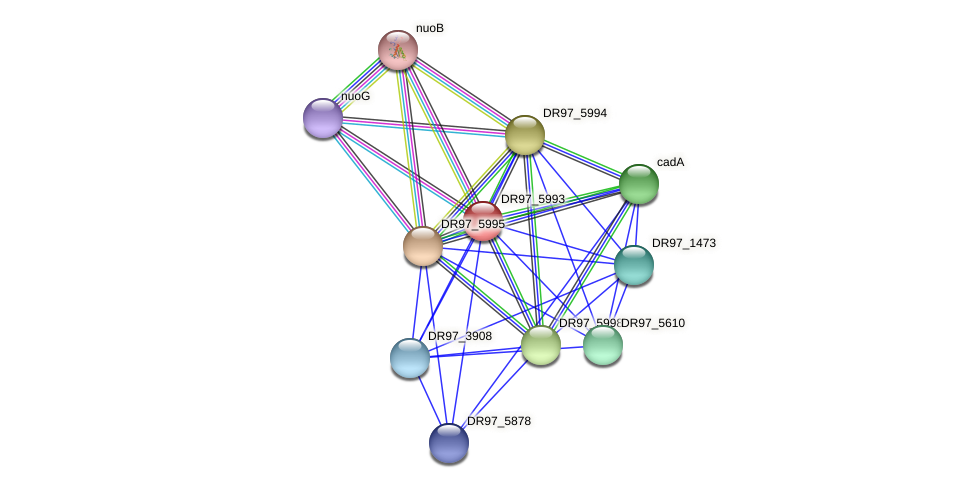 DR97_5993 protein (Pseudomonas aeruginosa) - STRING interaction network