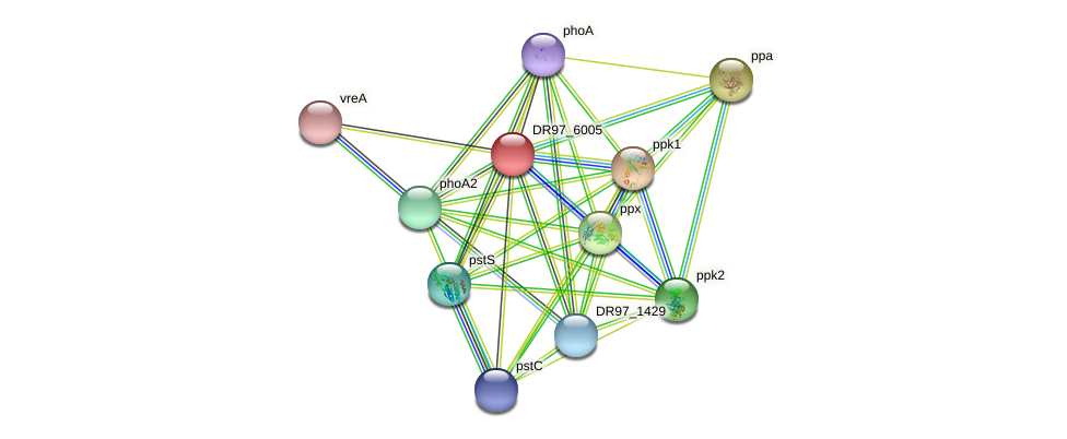 DR97_6005 protein (Pseudomonas aeruginosa) - STRING interaction network