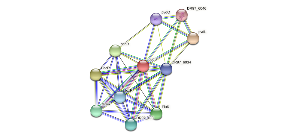 pvdS protein (Pseudomonas aeruginosa) - STRING interaction network