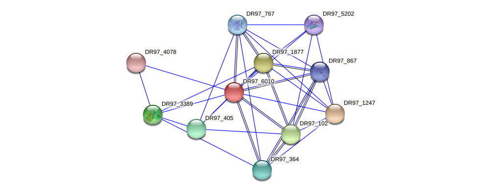 DR97_6010 protein (Pseudomonas aeruginosa) - STRING interaction network