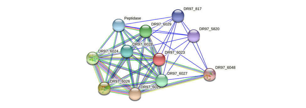 DR97_6023 protein (Pseudomonas aeruginosa) - STRING interaction network