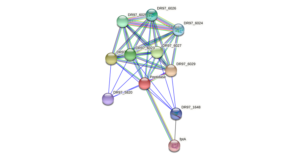 DR97_6030 protein (Pseudomonas aeruginosa) - STRING interaction network
