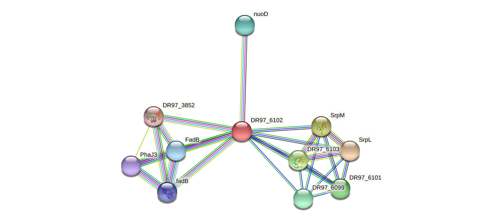 DR97_6102 protein (Pseudomonas aeruginosa) - STRING interaction network