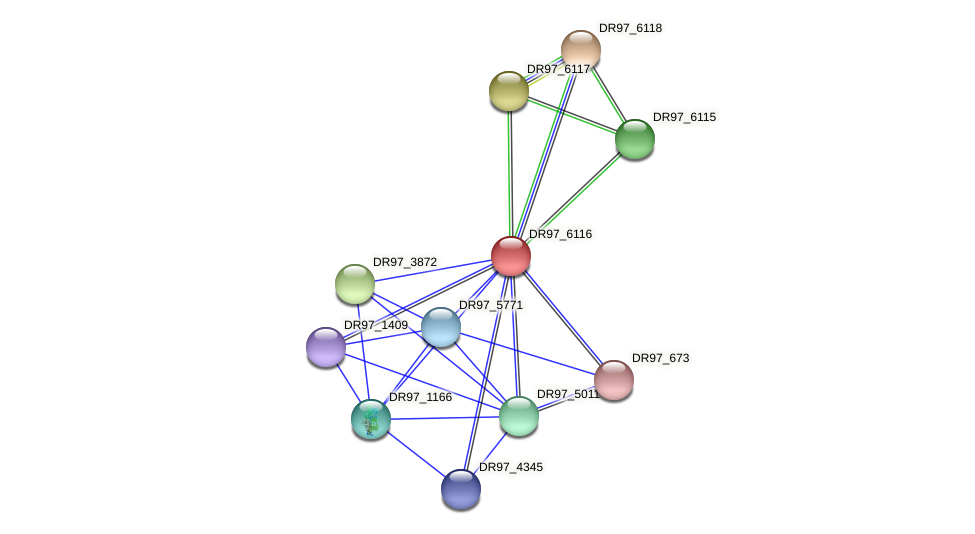 DR97_6116 protein (Pseudomonas aeruginosa) - STRING interaction network
