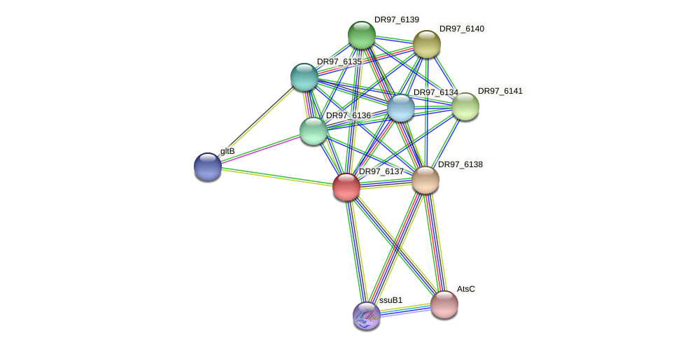DR97_6137 protein (Pseudomonas aeruginosa) - STRING interaction network