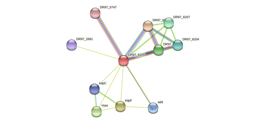 PACL_0323 protein (Pseudomonas aeruginosa) - STRING interaction network