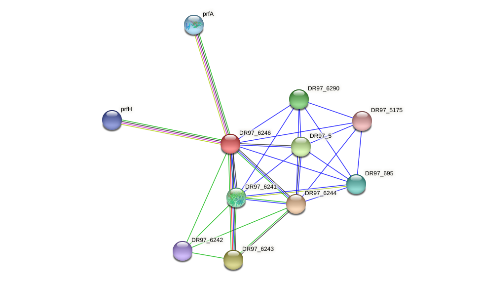 DR97_6246 protein (Pseudomonas aeruginosa) - STRING interaction network