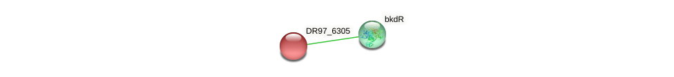 DR97_6305 protein (Pseudomonas aeruginosa) - STRING interaction network