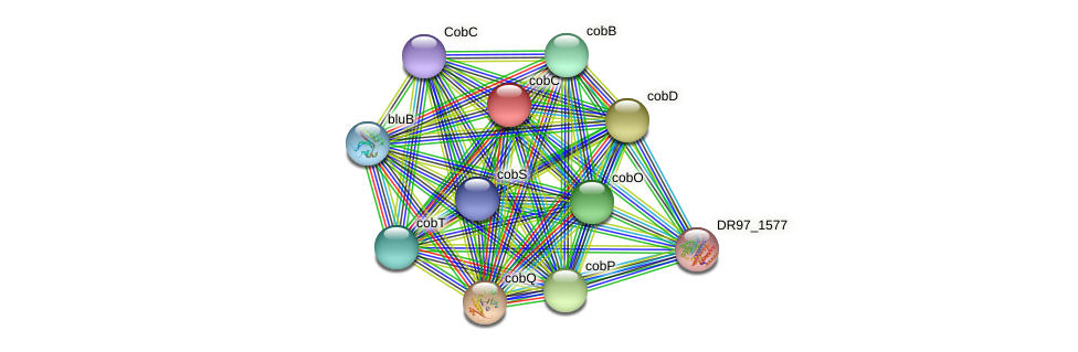 cobC protein (Pseudomonas aeruginosa) - STRING interaction network