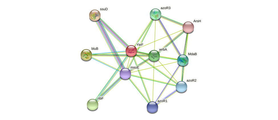 yieF protein (Pseudomonas aeruginosa) - STRING interaction network