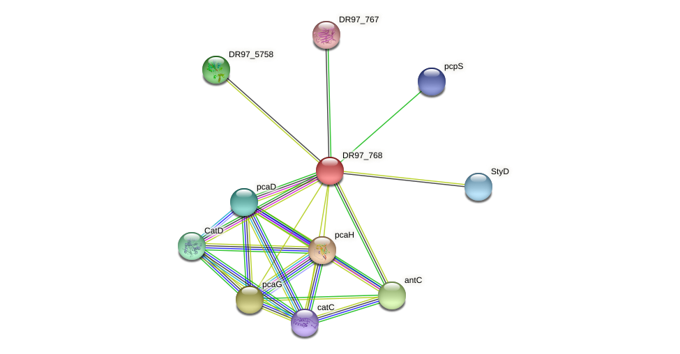 DR97_768 protein (Pseudomonas aeruginosa) - STRING interaction network