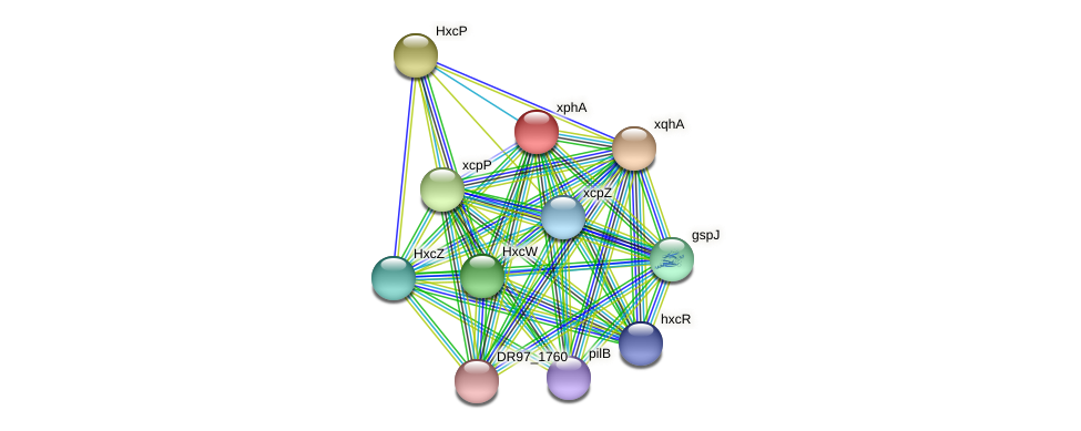 DR97_8 protein (Pseudomonas aeruginosa) - STRING interaction network
