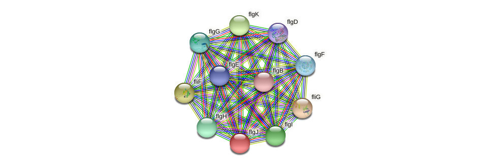 flgJ protein (Pseudomonas aeruginosa) - STRING interaction network