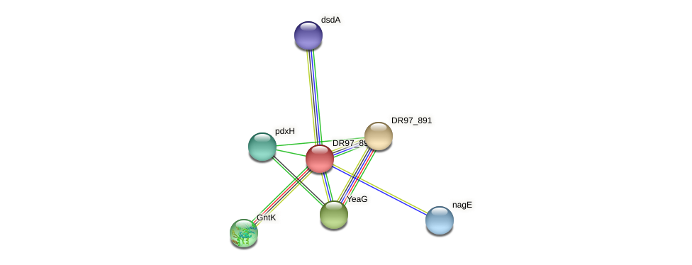 DR97_893 protein (Pseudomonas aeruginosa) - STRING interaction network