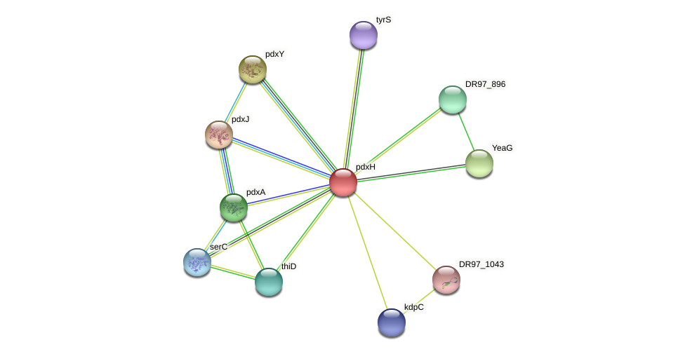 DR97_895 protein (Pseudomonas aeruginosa) - STRING interaction network