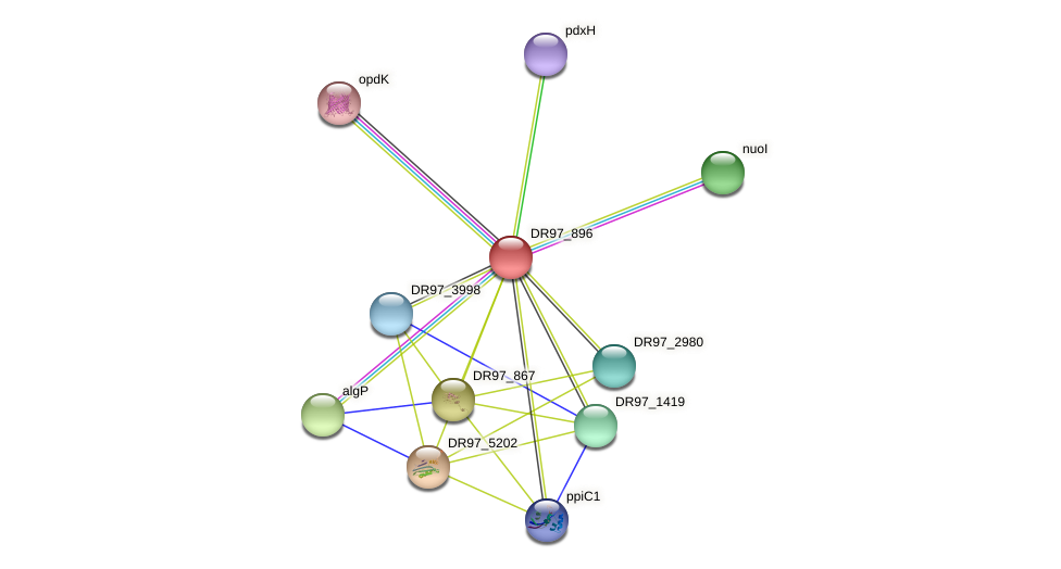 DR97_896 protein (Pseudomonas aeruginosa) - STRING interaction network