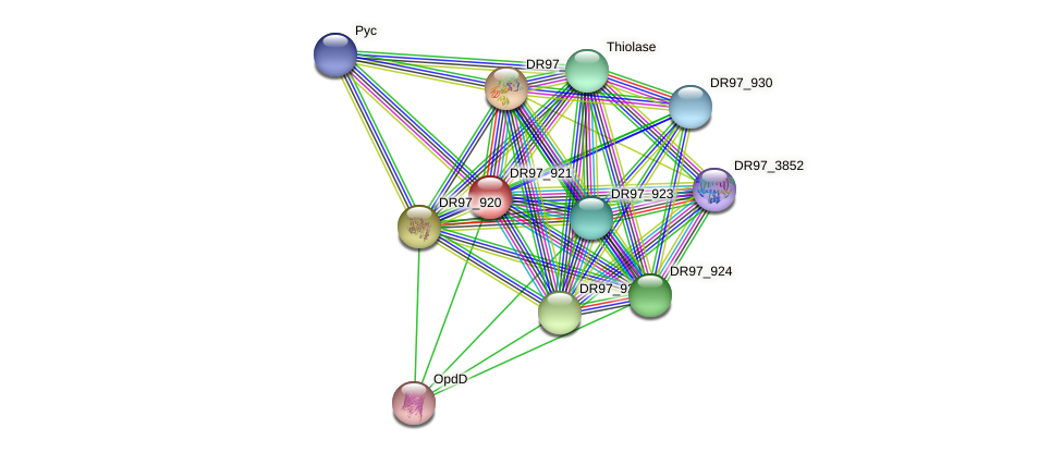 DR97_921 protein (Pseudomonas aeruginosa) - STRING interaction network