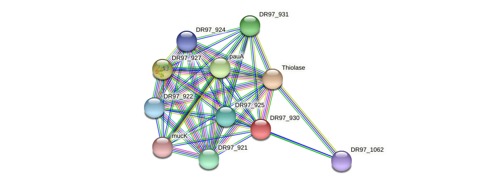 DR97_930 protein (Pseudomonas aeruginosa) - STRING interaction network