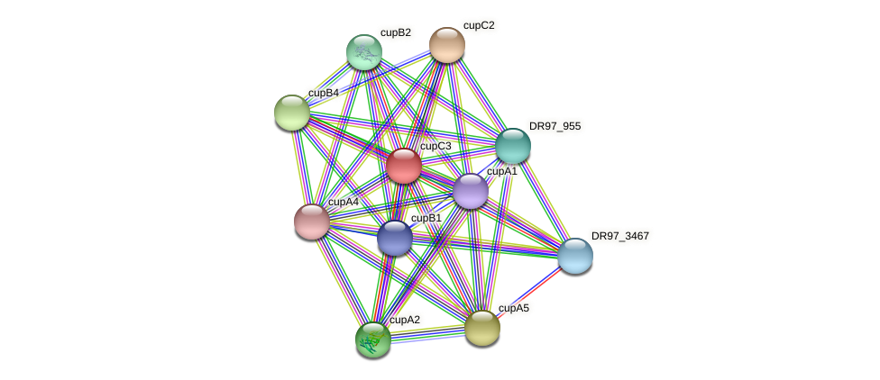 cupC3 protein (Pseudomonas aeruginosa) - STRING interaction network