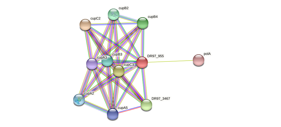 DR97_955 protein (Pseudomonas aeruginosa) - STRING interaction network