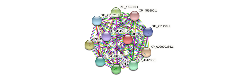 XP_455318.1 protein (Kluyveromyces lactis) - STRING interaction network