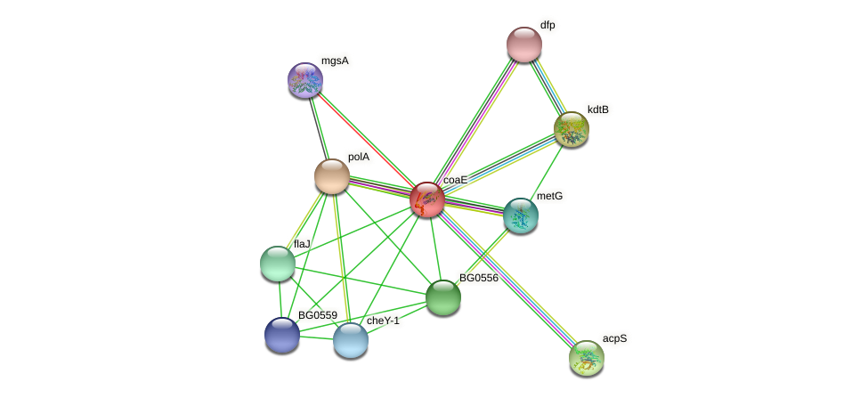 coaE protein (Borrelia garinii) - STRING interaction network