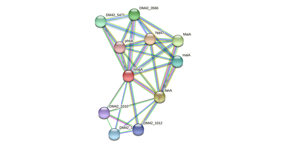 hmgA protein (Burkholderia cepacia) - STRING interaction network