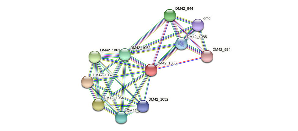 DM42_1066 protein (Burkholderia cepacia) - STRING interaction network