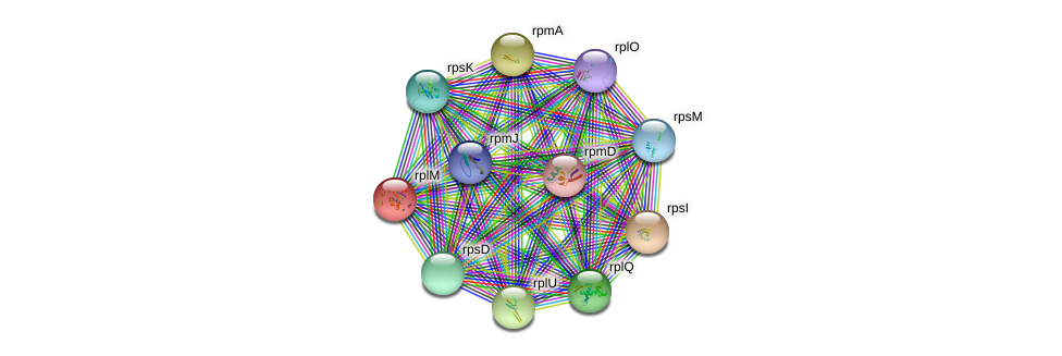 rplM protein (Burkholderia cepacia) - STRING interaction network