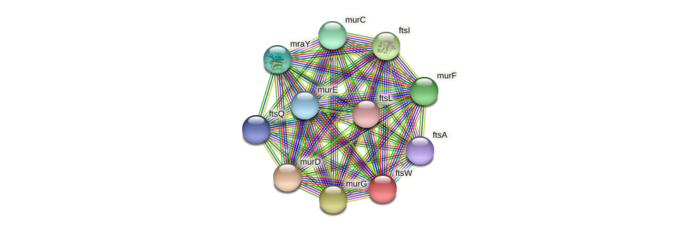 ftsW protein (Burkholderia cepacia) - STRING interaction network
