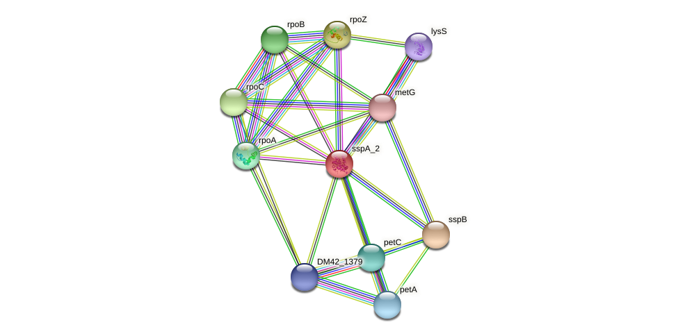 DM42_1377 protein (Burkholderia cepacia) - STRING interaction network
