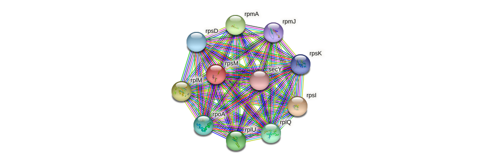 rpsM protein (Burkholderia cepacia) - STRING interaction network