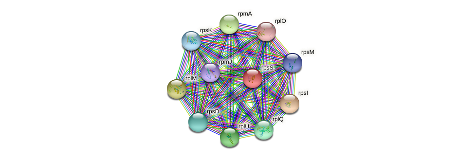 rpsS protein (Burkholderia cepacia) - STRING interaction network