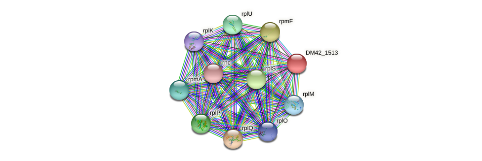 DM42_1513 protein (Burkholderia cepacia) - STRING interaction network