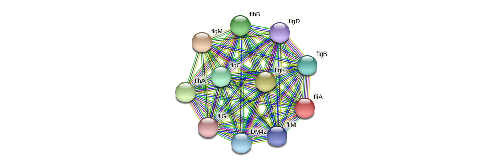 fliA protein (Burkholderia cepacia) - STRING interaction network