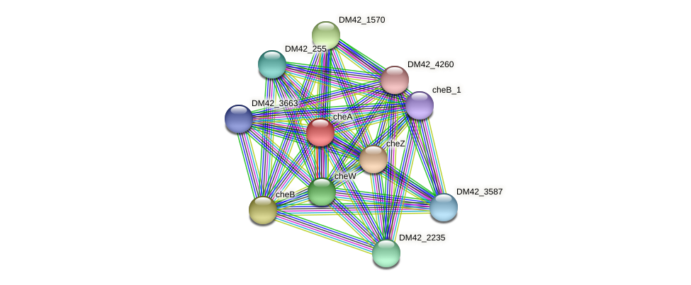 DM42_1572 protein (Burkholderia cepacia) - STRING interaction network