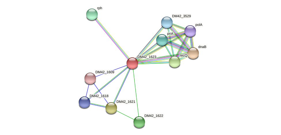 DM42_1623 protein (Burkholderia cepacia) - STRING interaction network