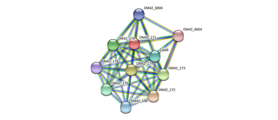 DM42_171 protein (Burkholderia cepacia) - STRING interaction network
