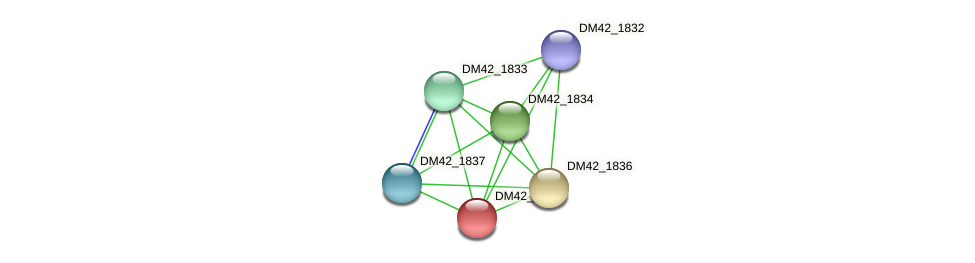 DM42_1835 protein (Burkholderia cepacia) - STRING interaction network
