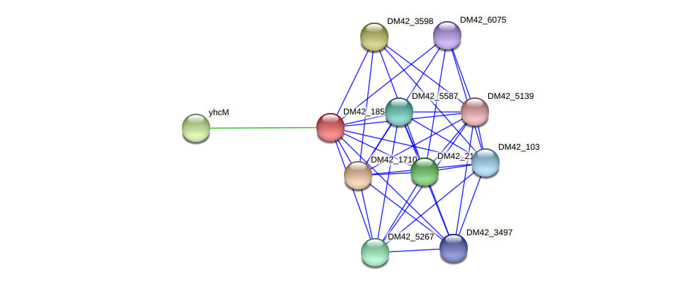 DM42_185 protein (Burkholderia cepacia) - STRING interaction network