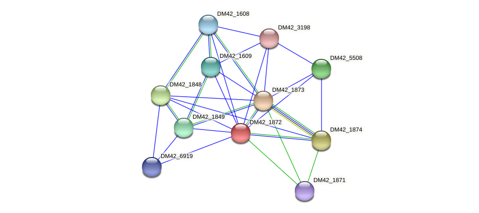 DM42_1872 protein (Burkholderia cepacia) - STRING interaction network