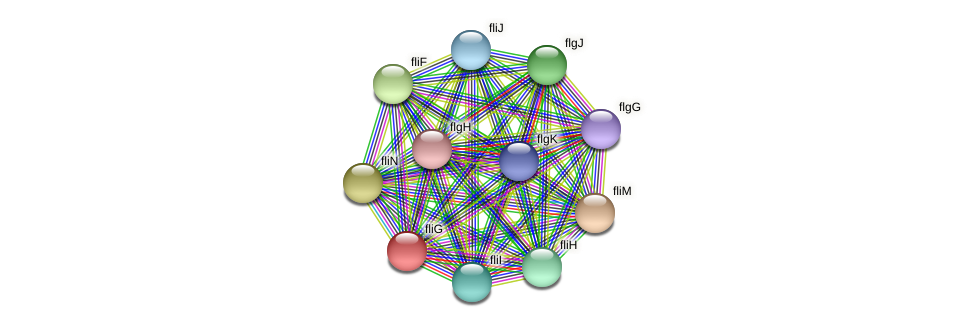 fliG protein (Burkholderia cepacia) - STRING interaction network