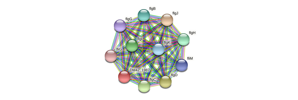 WI67_16105 protein (Burkholderia cepacia) - STRING interaction network