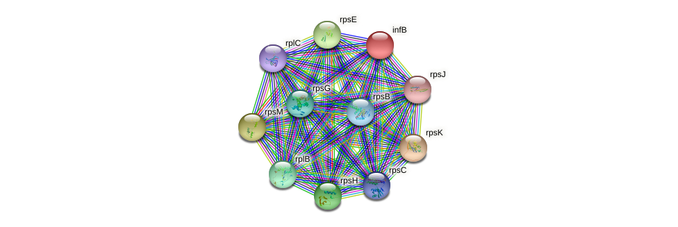 infB protein (Burkholderia cepacia) - STRING interaction network