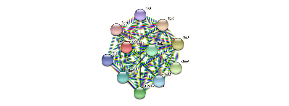 ycgR protein (Burkholderia cepacia) - STRING interaction network