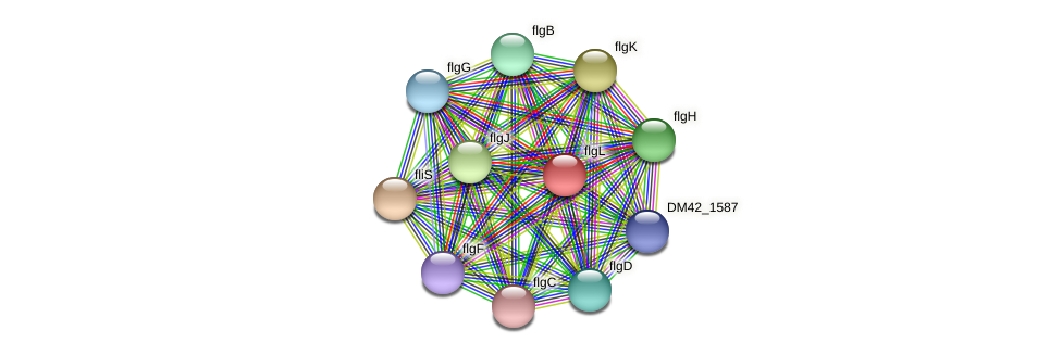 flgL protein (Burkholderia cepacia) - STRING interaction network
