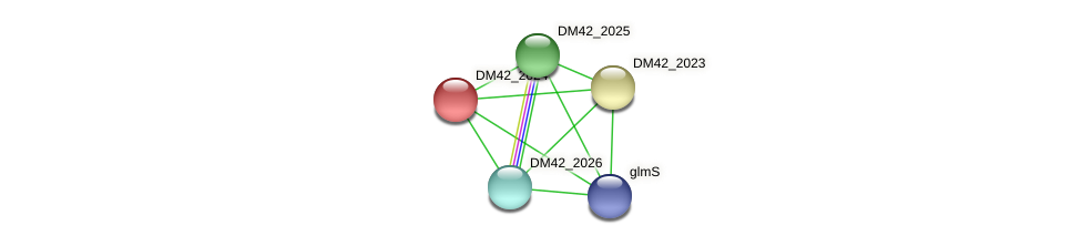 DM42_2024 protein (Burkholderia cepacia) - STRING interaction network